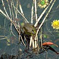 Frog On A Stick by Robert Meanor