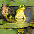 Frog On A Throne by Mike Fitzgerald
