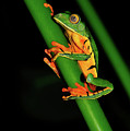 Frog Pole Vault  by Harry Spitz