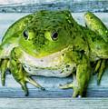 Frog Portrait by Edward Peterson