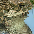 Frog Reflection by Cliff Norton