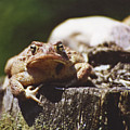 Frog Stump by Brian Marsh