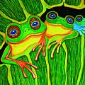 Froggie Trio by Nick Gustafson