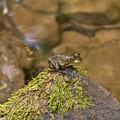 Froggy On A Hill by Douglas Barnett