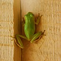 Froggy by Pattie Frost