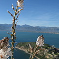 From Atop Nafplion by Daniel  Taylor