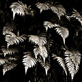 Fronds by Marilyn Hunt