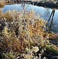 Frost Along Nippersink Creek In Glacial Park At Sunrise by Ray Mathis