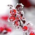 Frost by Boris Andresyuk