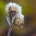 Frost by Elmer Jensen