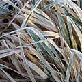 Frost In November's Field by Terrance De Pietro