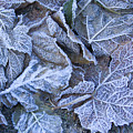 Frost by Idaho Scenic Images Linda Lantzy