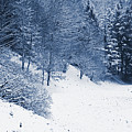 Frost Path by Daniel Csoka