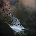 Frost Web by Sharie Richardson