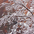 Frosted Branches by Daniel Woodrum