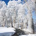 Frosted Cottonwoods by DeeLon Merritt