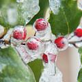 Frosted Holly by Jalene Januze