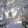 Frosty Boardwalk by Gary Beeler