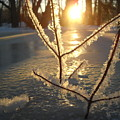 Frosty Branches At Sunrise by Kent Lorentzen