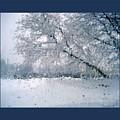 Frosty Daze by Linda Galok