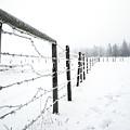 Frosty Fenceline by Shelly Priest