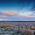 Frosty Fields by Jukka Heinovirta