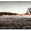 Frosty Landscape by Mal Bray