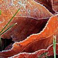 Frosty Leaves by Eldon Roberts