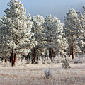 Frosty Pikes National Forest by Steve Krull
