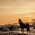 Frosty Pony by Rosie Hall