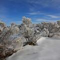 Frosty Shrubs Along The Hudson by Larry Federman