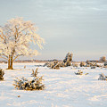 Frosty Solitude Tree In The First Morning Sunshine by Kennerth and Birgitta Kullman