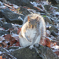 Frosty Squirrel by Benjamin Hanna