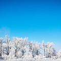 Frozen Beauty  by Cory Huchkowski