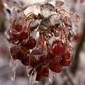 Frozen Berries by Andrei Shliakhau
