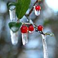 Frozen Berries by Donna Bentley