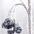 Frozen Berries by Lisa Larson