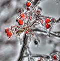 Frozen Berries by Sam Davis Johnson