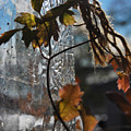 Frozen Breath  by The Artist Project