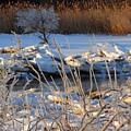 Frozen Fantasy  by Dianne Cowen
