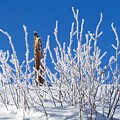 Frozen Fence Post by LeAnne Perry