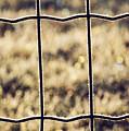 Frozen Fence by Wim Lanclus