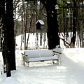 Frozen Glider by Paul Sachtleben
