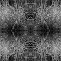 Frozen Grass Abstract In Bw by Gary Cloud