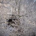 Frozen In Ice by Tim The Bikeman