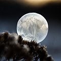 Frozen In Time by Christina VanGinkel