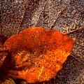 Frozen Leaf by Michael Mogensen