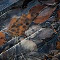 Frozen Leaves In Fall by Jonathan Hansen