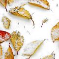 Frozen Leaves by Svetlana Sewell