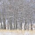 Frozen Limbs by Csilla Florida